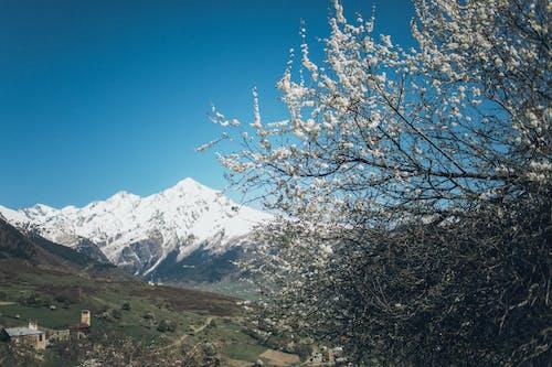 Photos gratuites de arbres, cailloux, environnement, froid