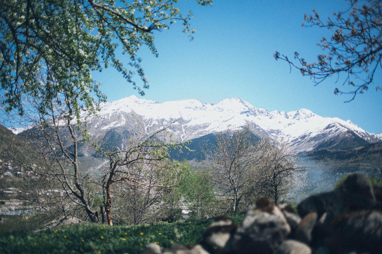 White Mountain and Trees