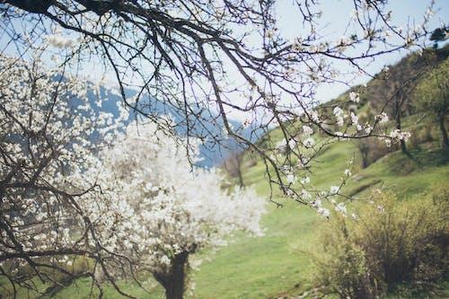 Foto d'estoc gratuïta de arbres, branques d'arbre, colors, creixement