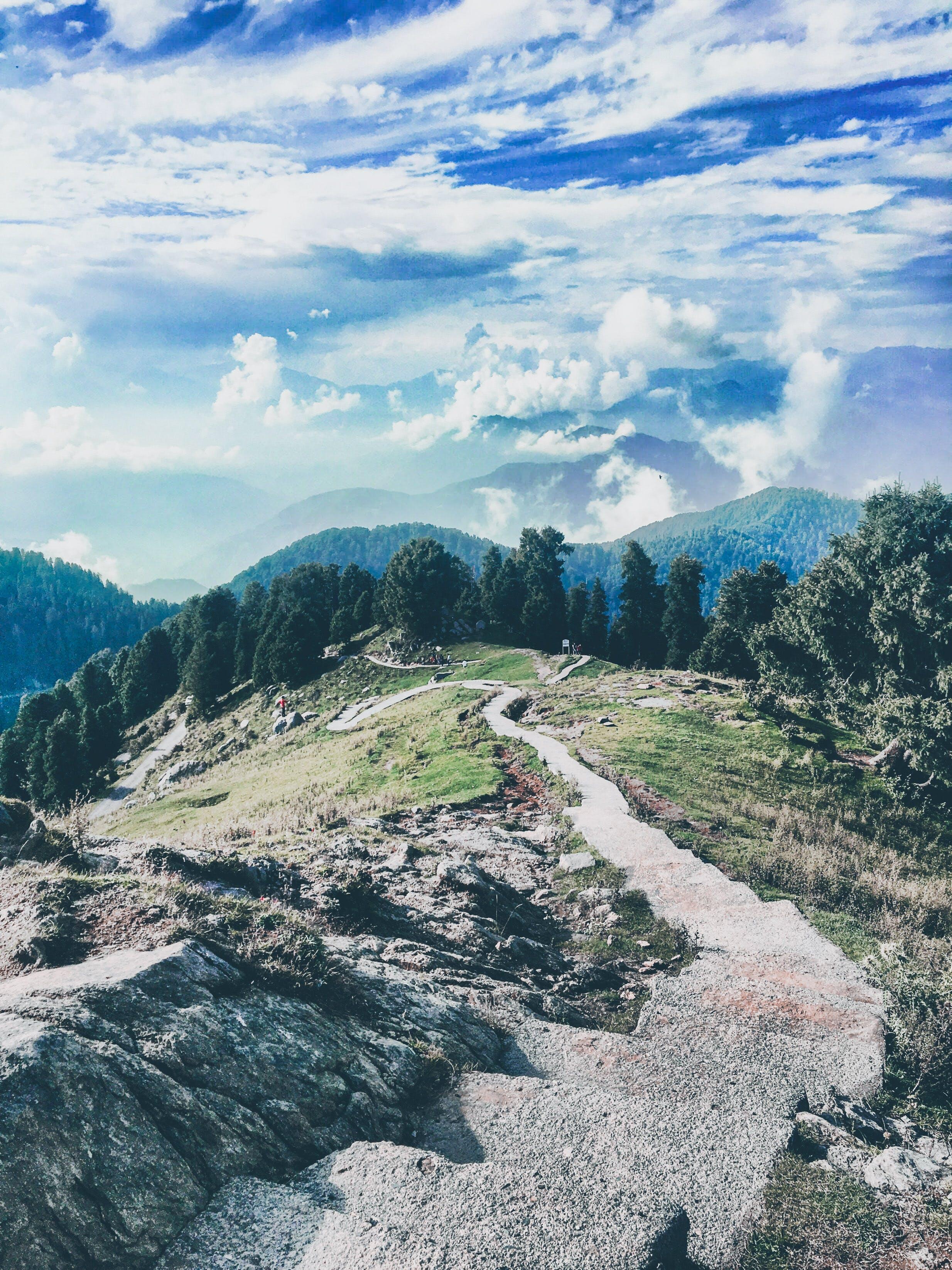 Immagine gratuita di alberi, percorso, via