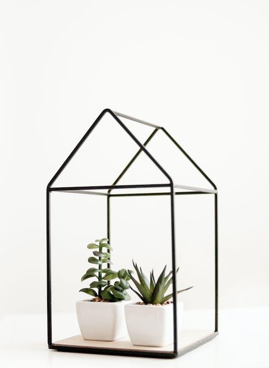 Fondo blanco, naturaleza muerta, plantas