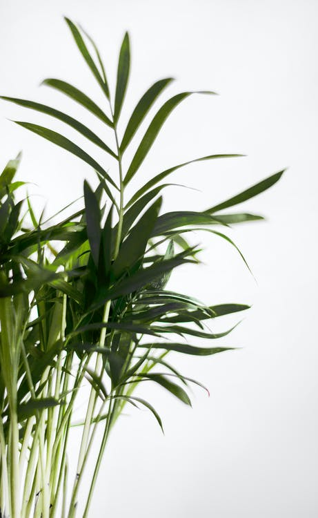 gyár, növény, üzem