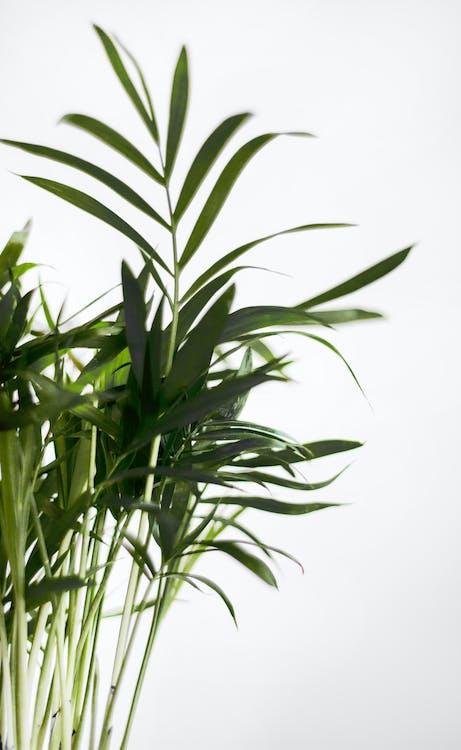 Grüne Blattpflanze Nahe Weißer Oberfläche