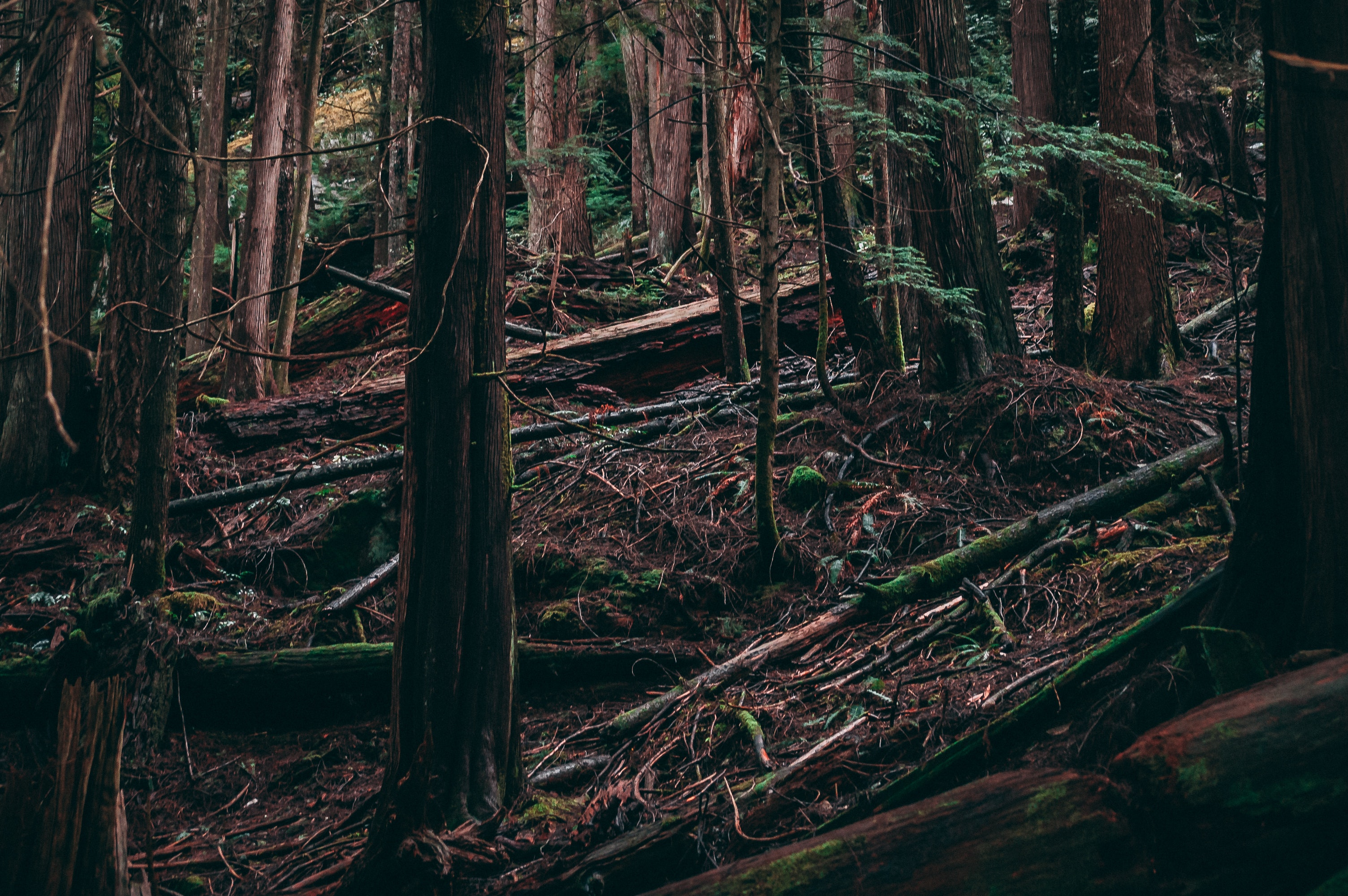 Free stock photo of british columbia, canada, forest