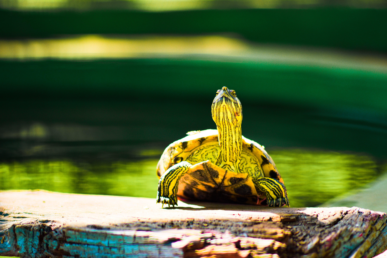 Free stock photo of animal photography