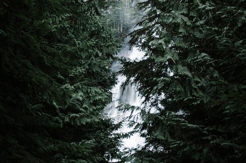 Kostnadsfri bild av kanada, kaskad, miljö, natur
