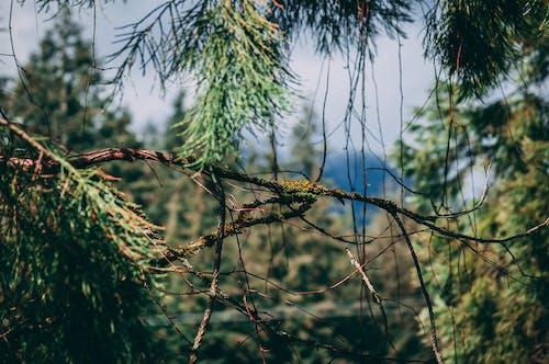 Fotos de stock gratuitas de arboles, Canadá, columbia británica, montaña