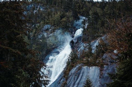 カナダ, シャノン滝, バンクーバー, ブリティッシュコロンビアの無料の写真素材