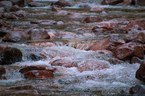 Fotos de stock gratuitas de agua dulce, agua que fluye, Canadá, cascada