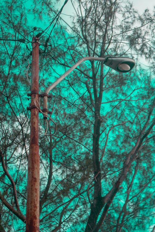 Foto d'estoc gratuïta de abandonat, arbre caigut, bellesa a la natura, blau