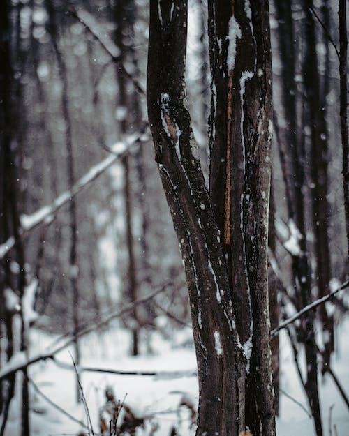 冬季, 宏觀, 樹, 樹皮 的 免费素材照片