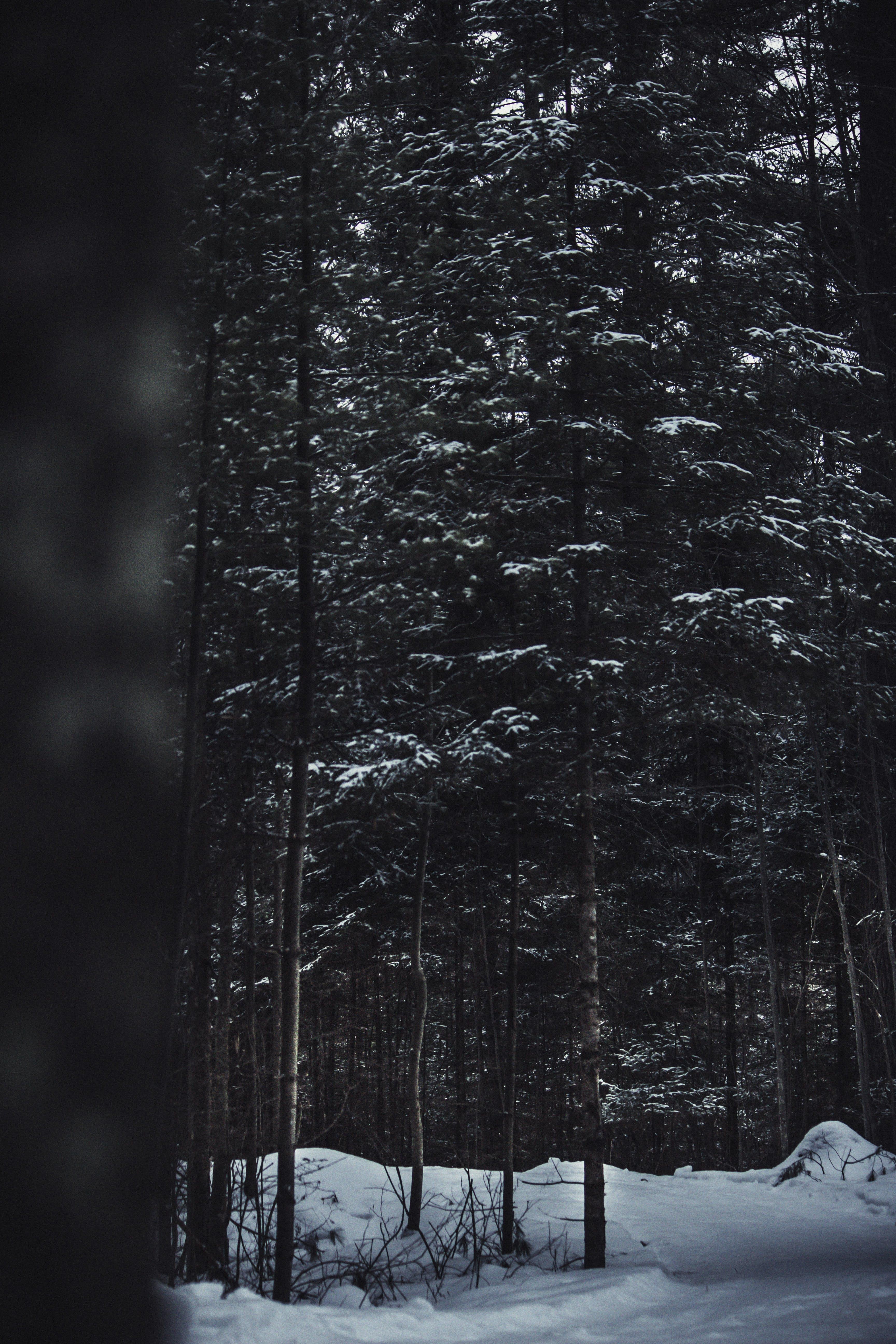 冬季, 冷, 天性, 季節 的 免費圖庫相片
