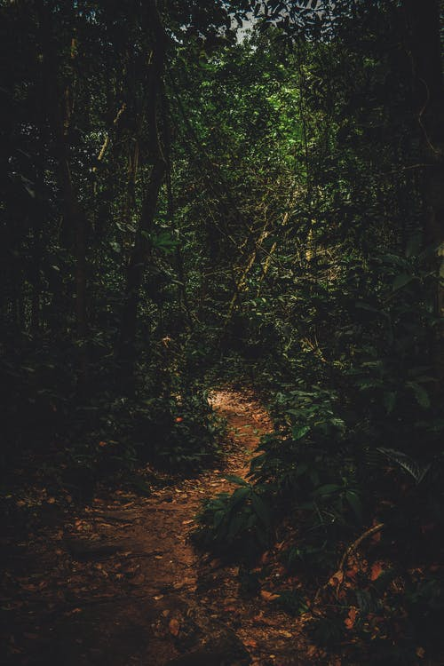 Photo Of Path In A Forest
