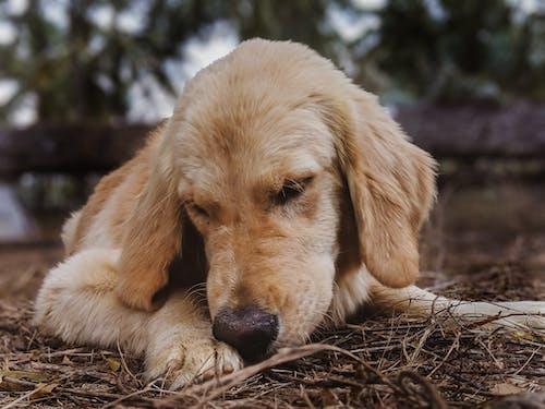 Fotobanka sbezplatnými fotkami na tému mláďa psa, obojok, pes, psi
