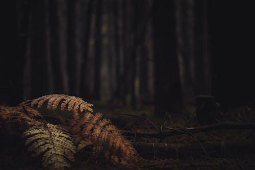 Foto d'estoc gratuïta de arbres, boscos, clareja, creixement