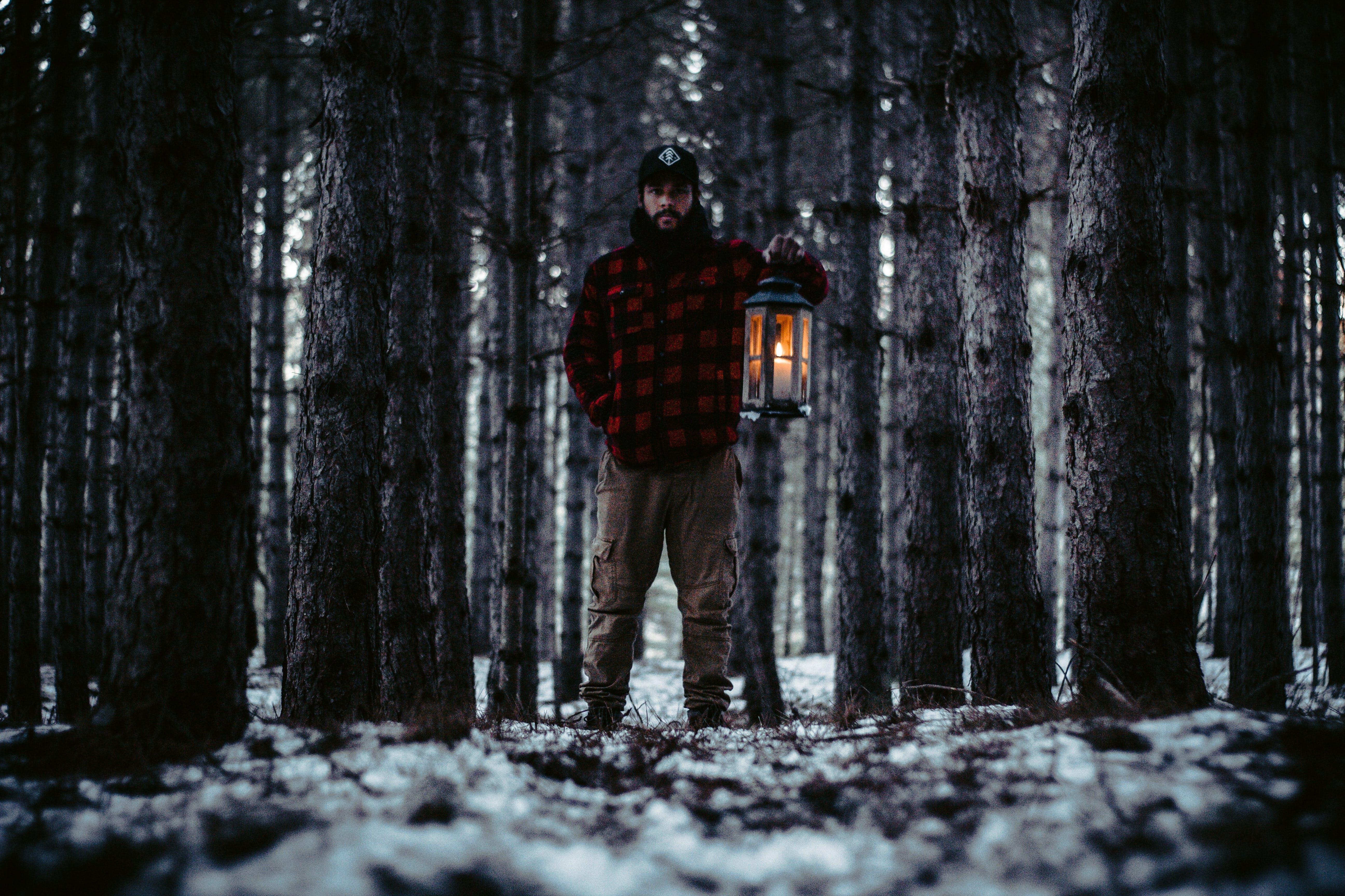 Бесплатное стоковое фото с деревья, живописный, зима, легкий