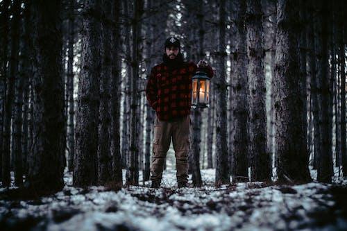 가벼운, 겨울, 경치, 경치가 좋은의 무료 스톡 사진