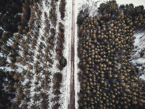 Бесплатное стоковое фото с деревья, дорога, зима, с высоты птичьего полета
