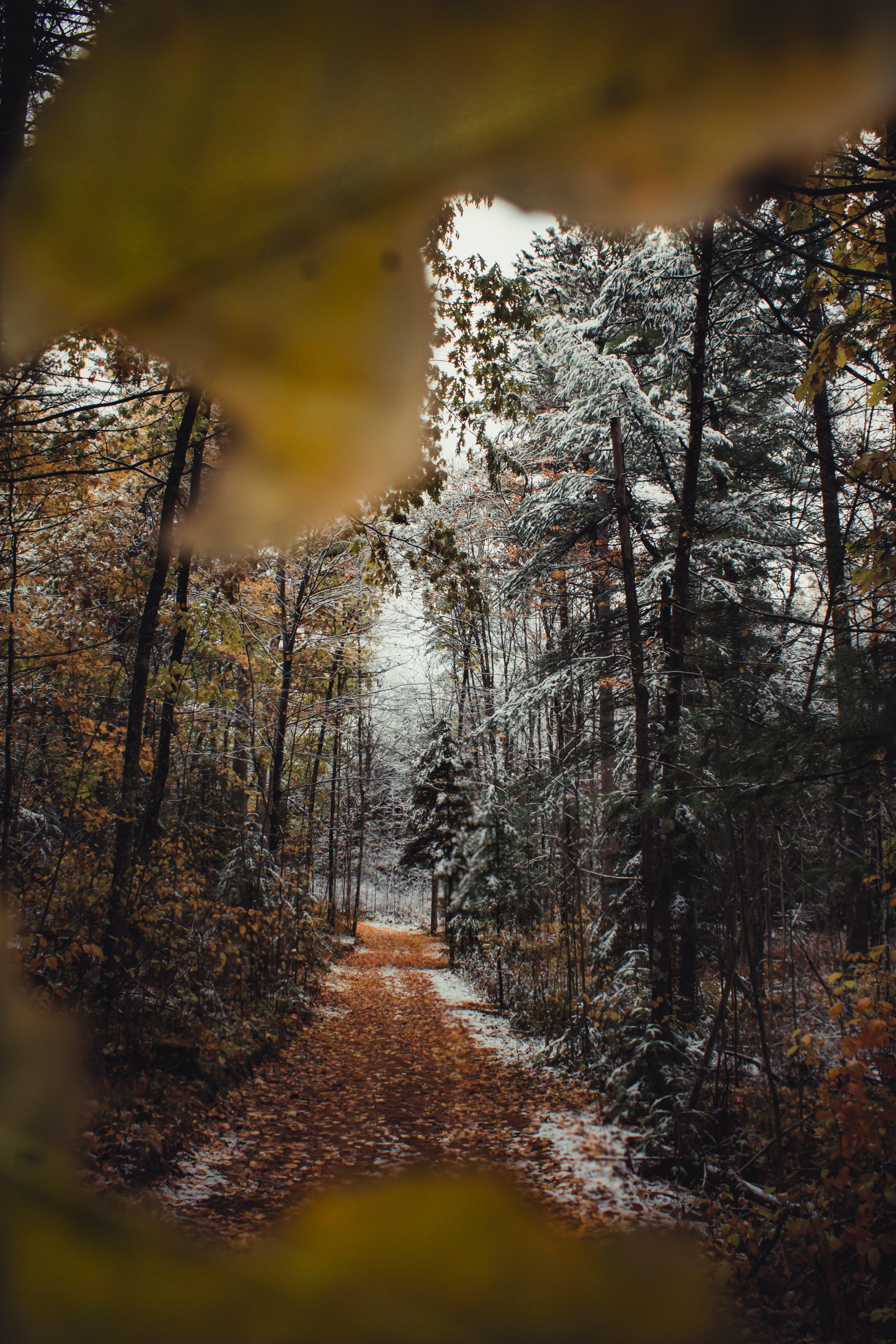 Kostenloses Stock Foto zu bäume, blätter, holz, pfad