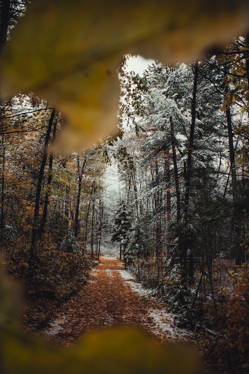 Gratis lagerfoto af skov, sti, træer