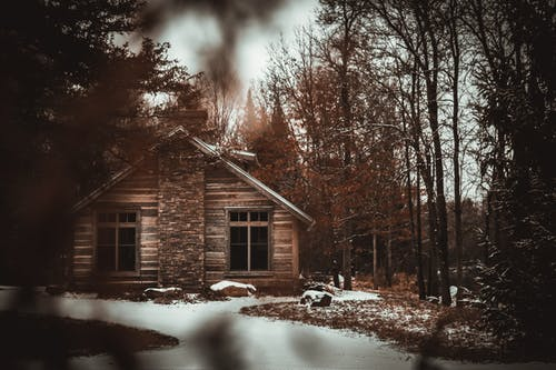 Cabin Near Trees