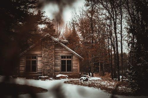 Foto d'estoc gratuïta de arbres, boscos, cabana, cabana de fusta