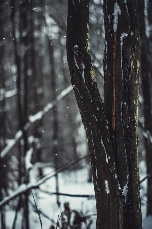나무 둥치, 눈의 무료 스톡 사진