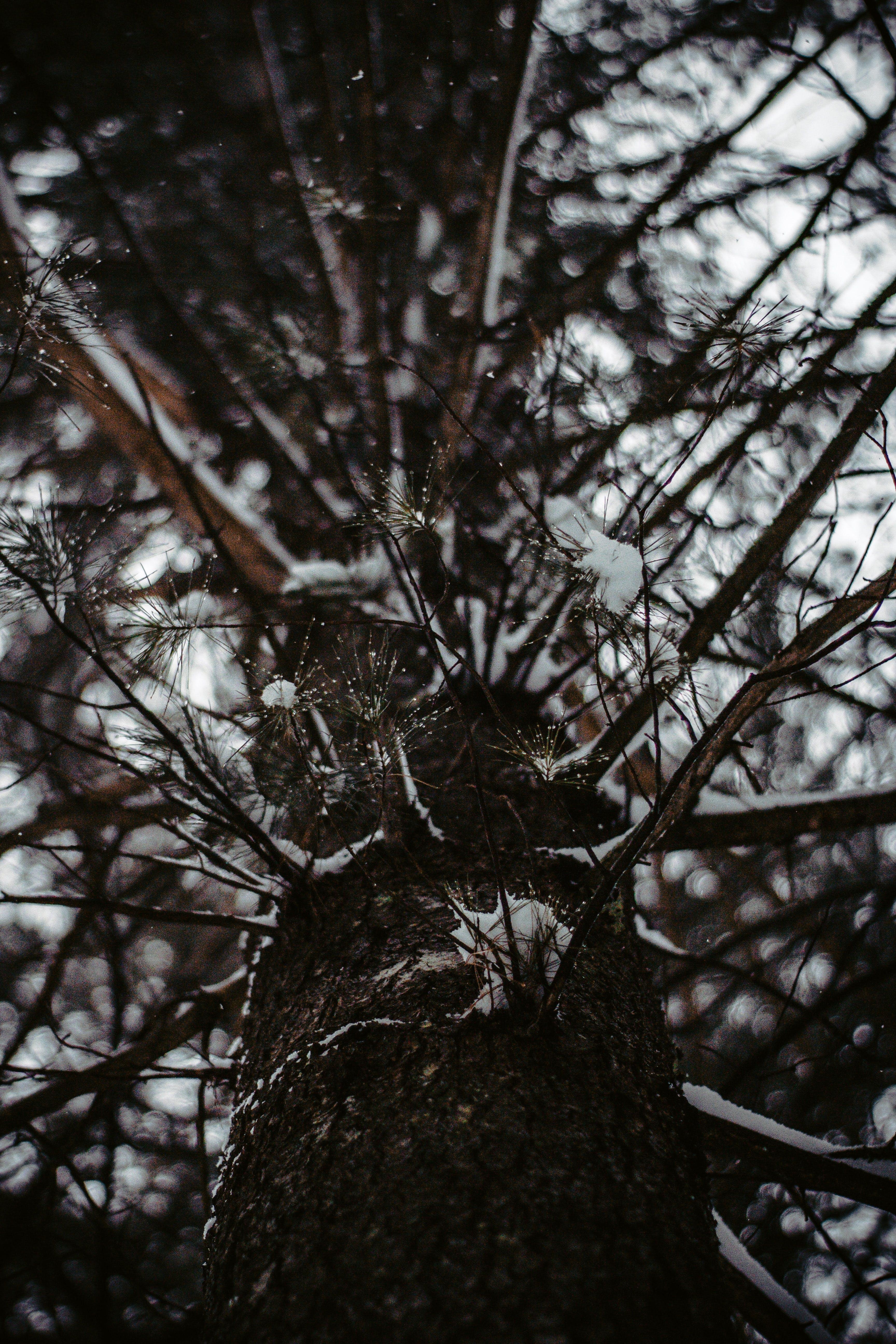 Foto stok gratis batang pohon, bidikan sudut sempit, cabang, kayu