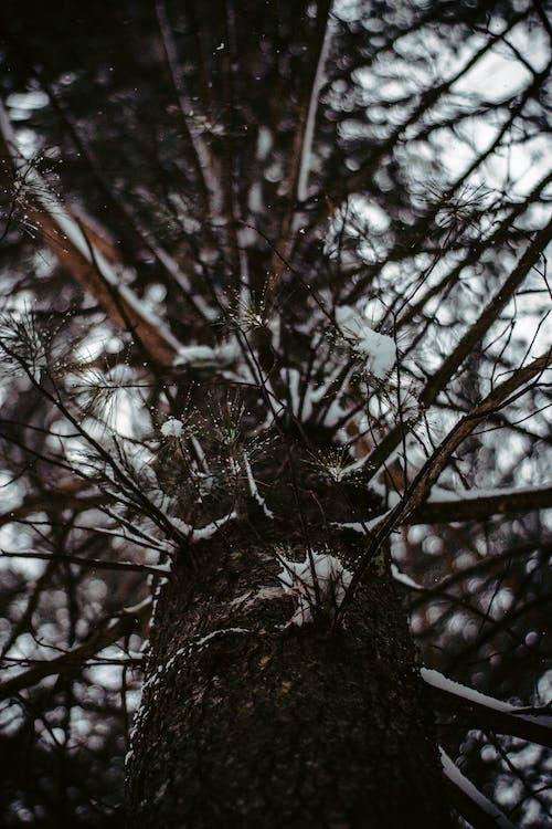 Бесплатное стоковое фото с ветвь, дерево, дневной свет, зима