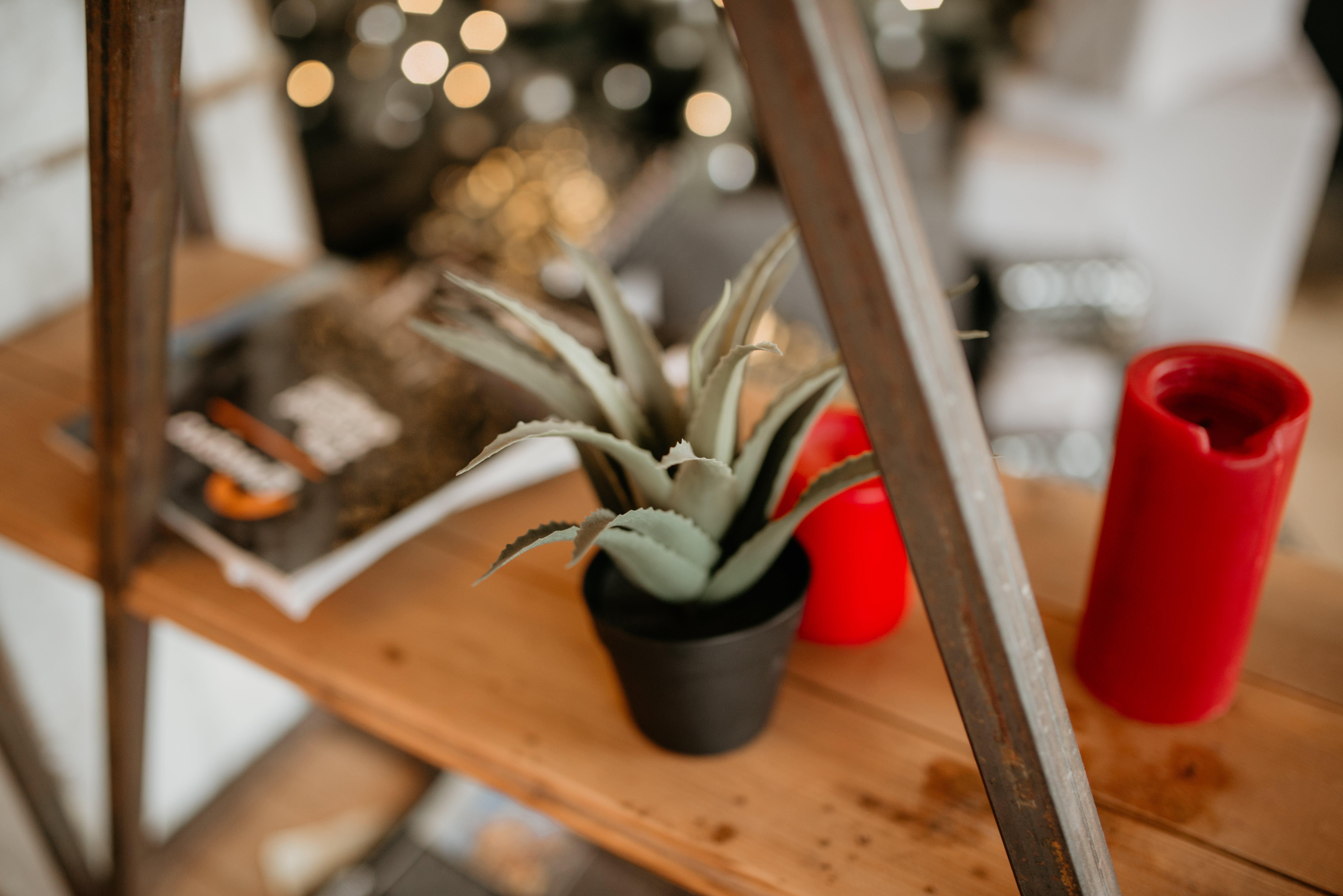 Green Aloe Vera on Brown Wooden Desk