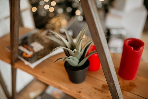 Gratis lagerfoto af Aloe vera, container, hylde, indendørs