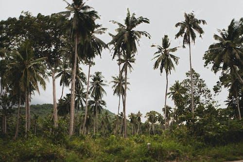 Immagine gratuita di alberi, alberi di cocco, cielo, cielo azzurro