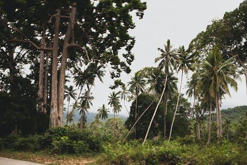 Foto profissional grátis de árvores, coqueiros, paisagem, palmeiras