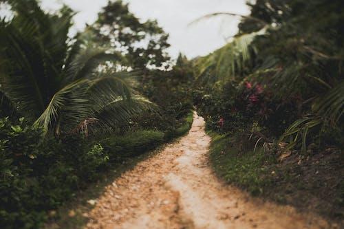 Photo of a dirt road between plants