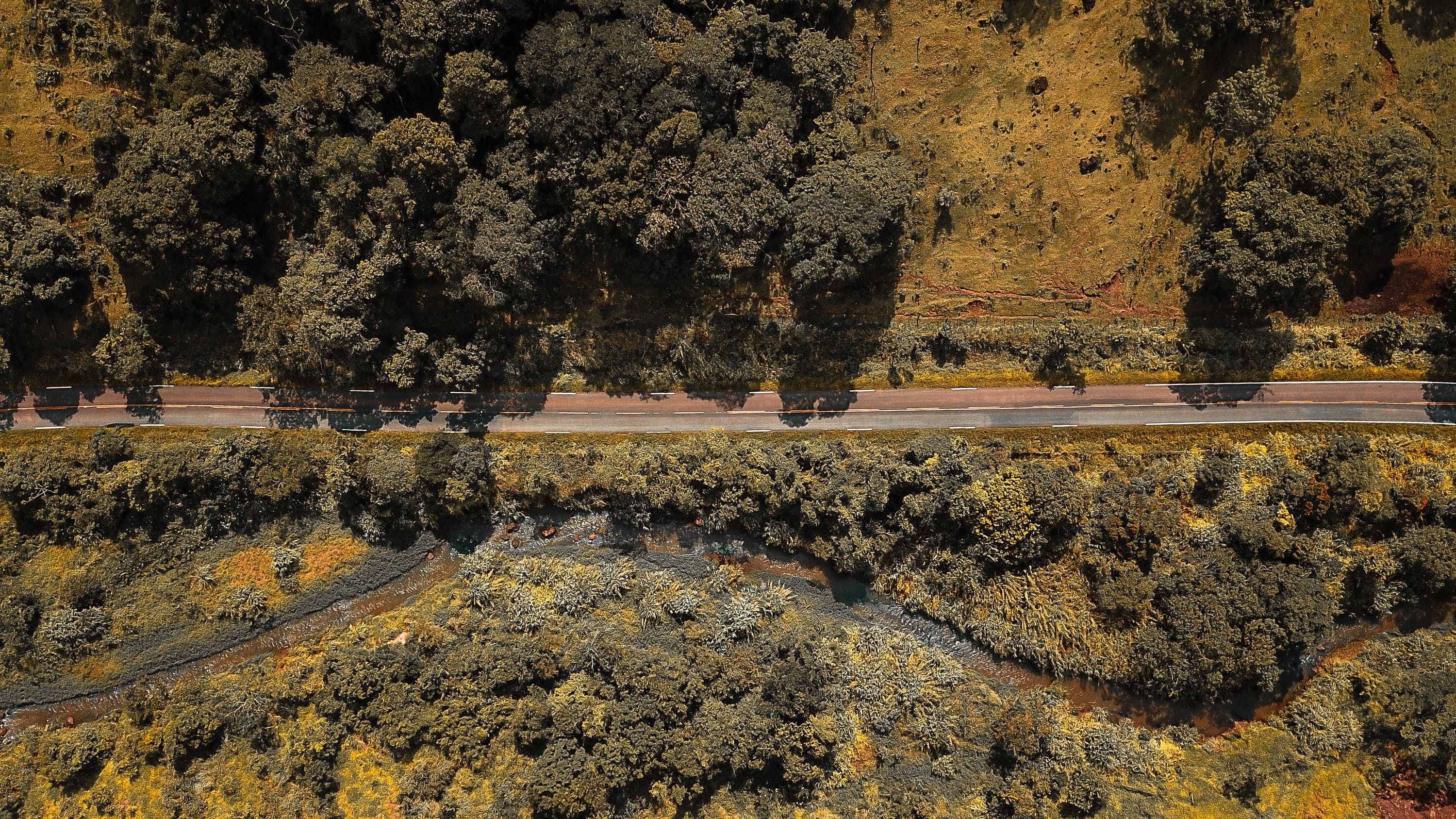 Bird's Eye View Of Road Surrounded By Trees