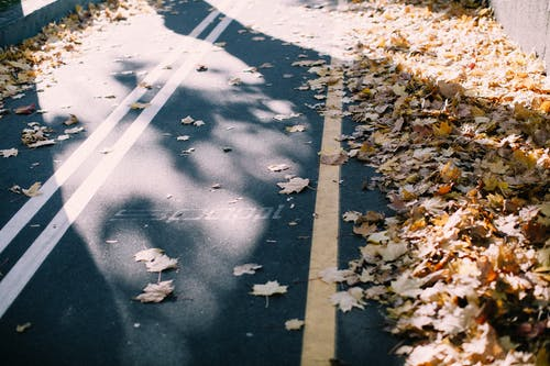 Maple Leaves on Roadway