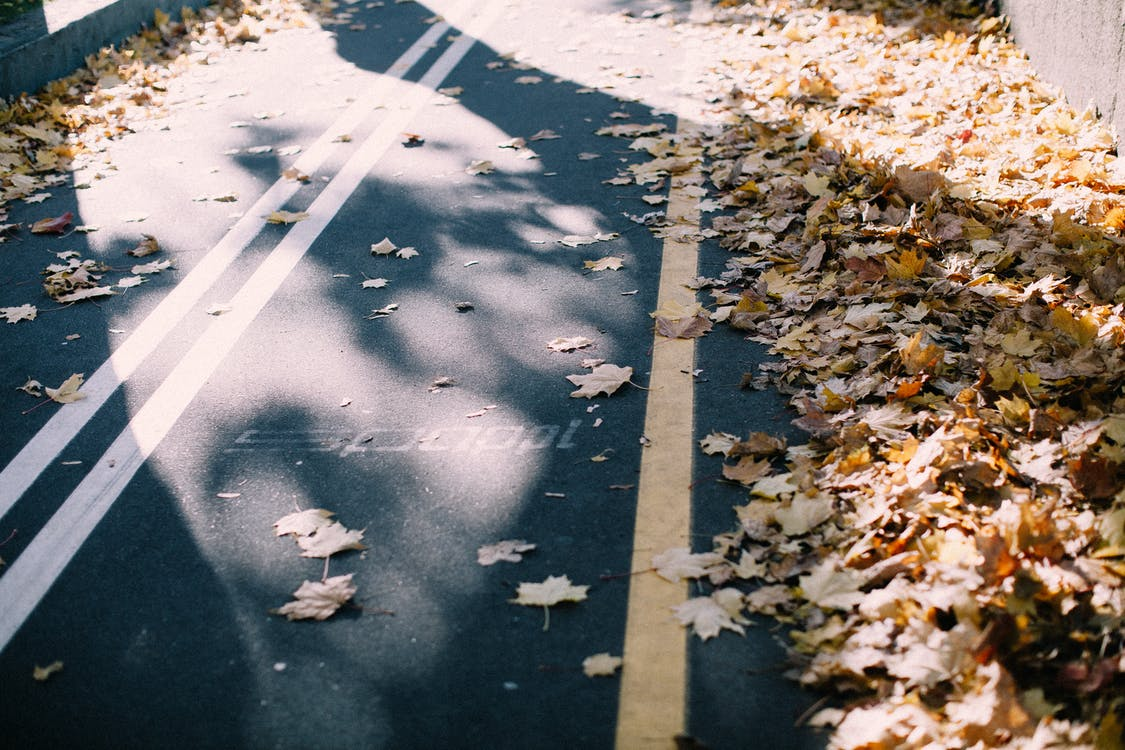 asfalt, begeleiding, esdoornbladeren
