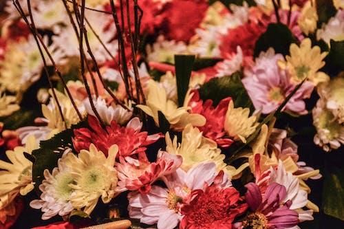Foto stok gratis berfokus, bunga-bunga, dasar, kasih sayang