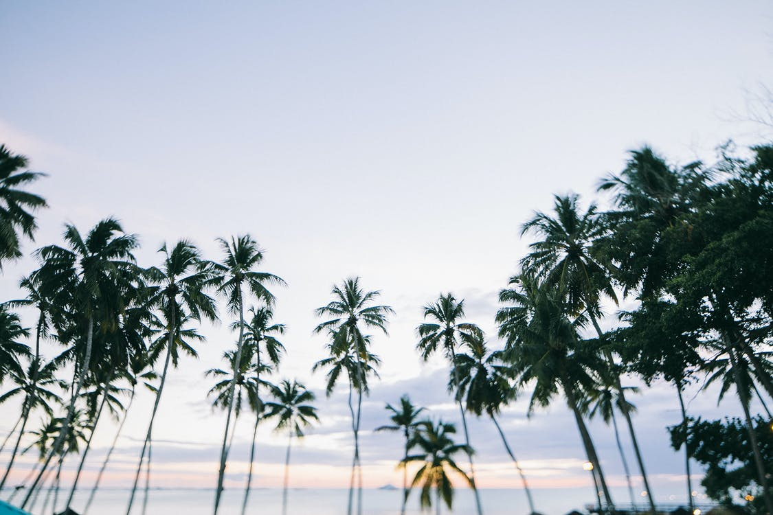 деревья, кокосовые пальмы, пальмовые деревья