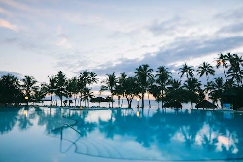 Безкоштовне стокове фото на тему «дерева, кокосові пальми, Курорт, пальми»