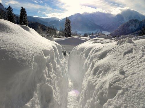 Foto d'estoc gratuïta de hivern, neu, nevant, paisatge d'hivern