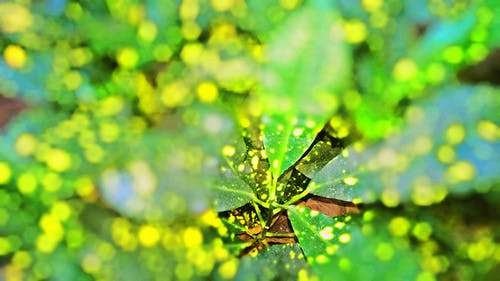 Free stock photo of Adobe Photoshop, colorful, leafs, nature photography