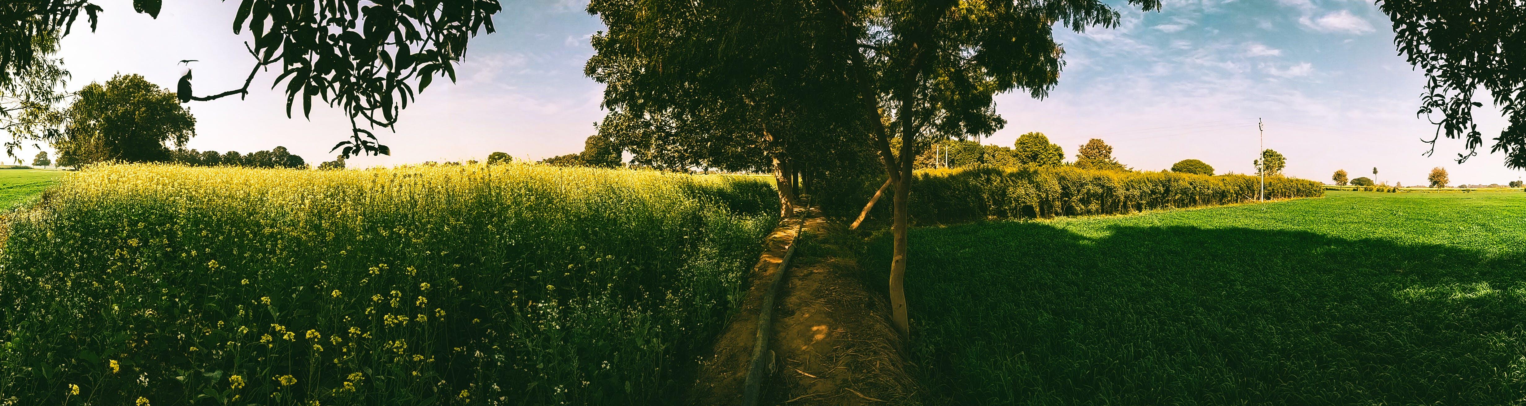 Základová fotografie zdarma na téma HD tapeta, hořčice, hřiště, jasná obloha