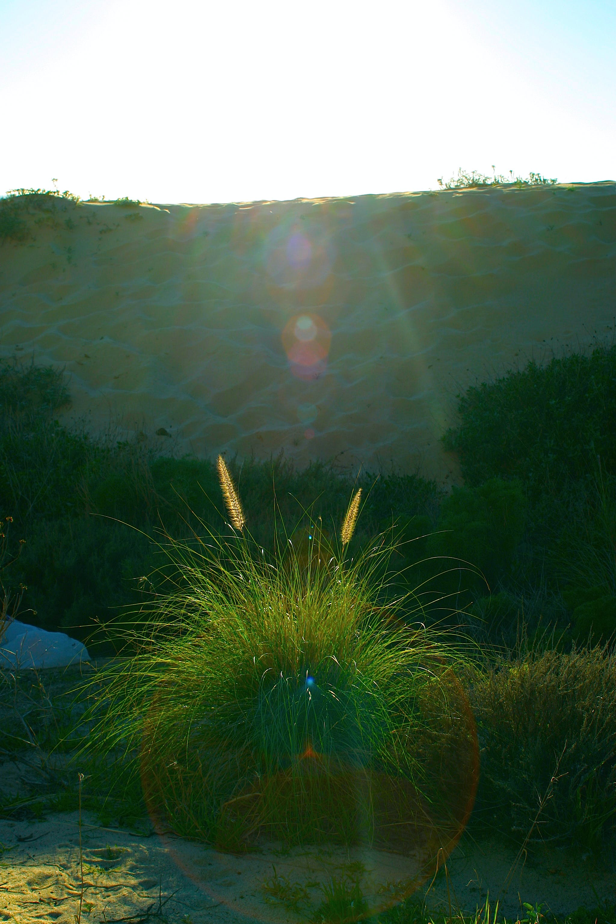 Free stock photo of desert, nature, plants, ray of sunshine