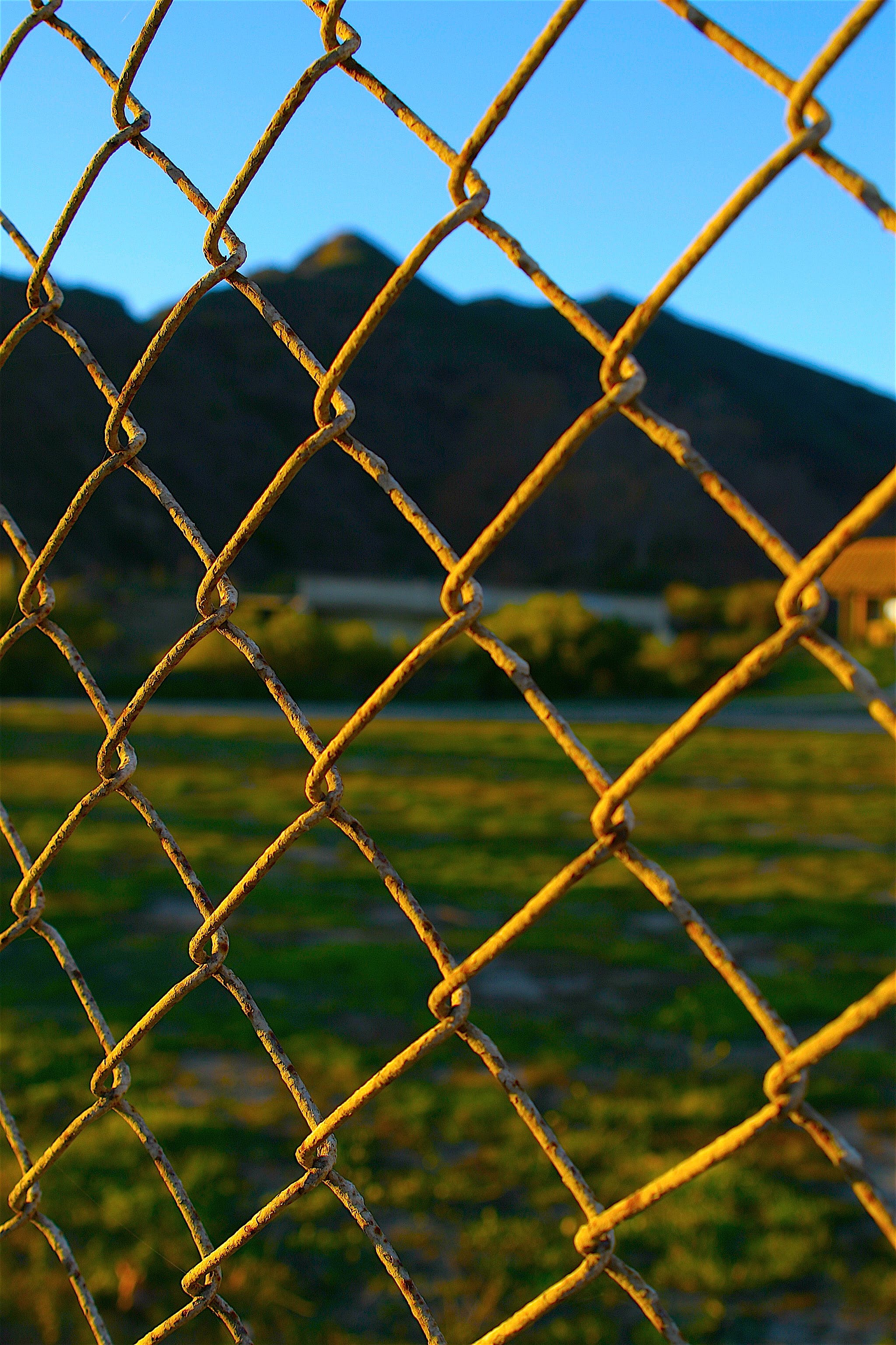 Free stock photo of chain link fence, nature