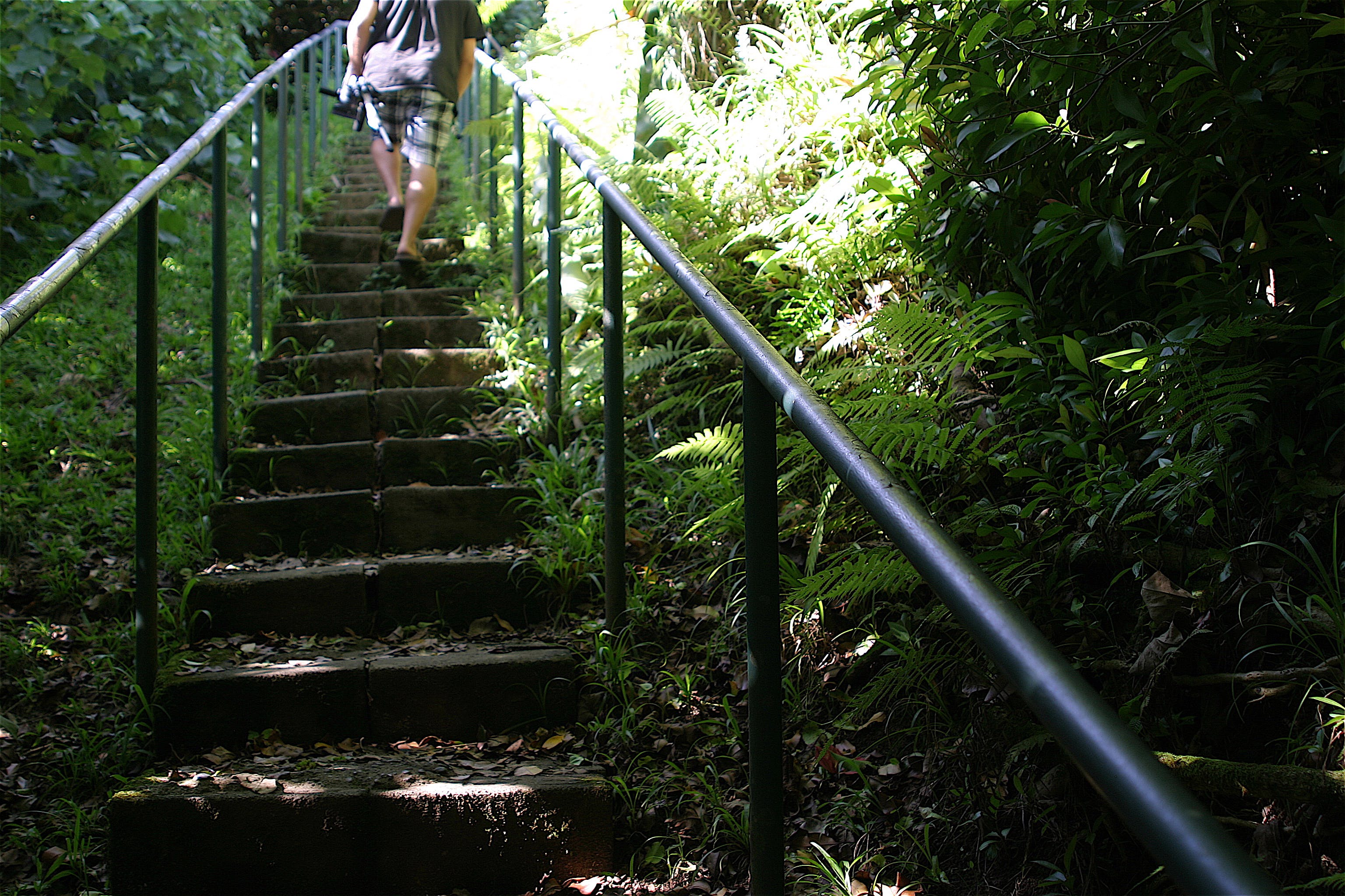 Free stock photo of foot path, nature, stairs, trail