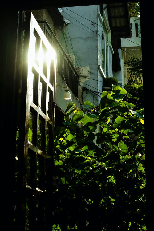 Free stock photo of backdoor, green leaf, ray of sunshine