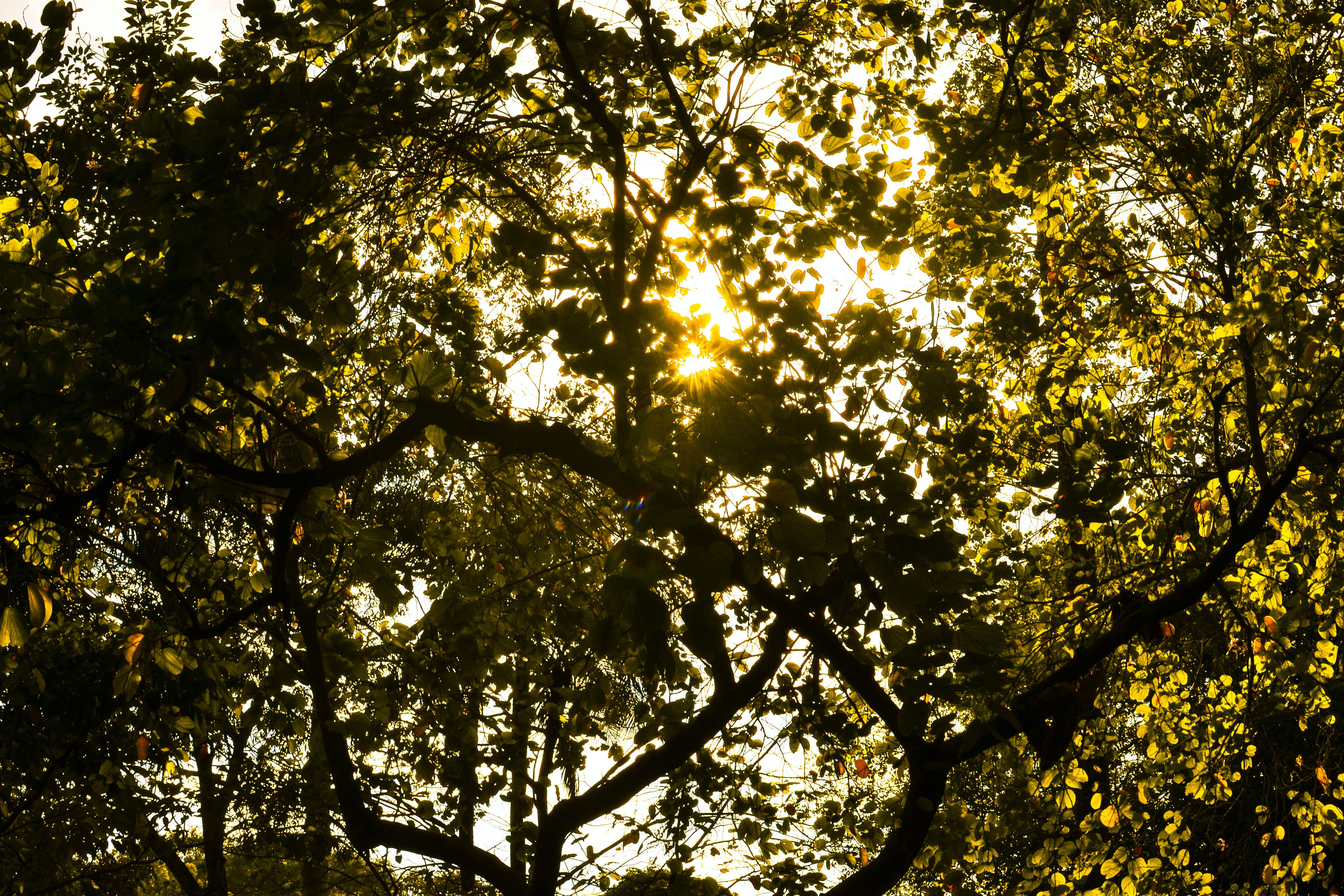Sunshine Through Green Leafed Tree