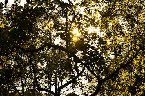 ağaç gövdesi, ağaçlar, arkadan aydınlatılmış, bagaj içeren Ücretsiz stok fotoğraf