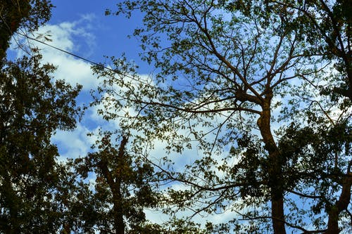 Free stock photo of dried leaf, sky, tree